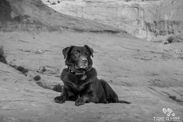 Black&White - Dog at Corona Arch, Moab, Utah