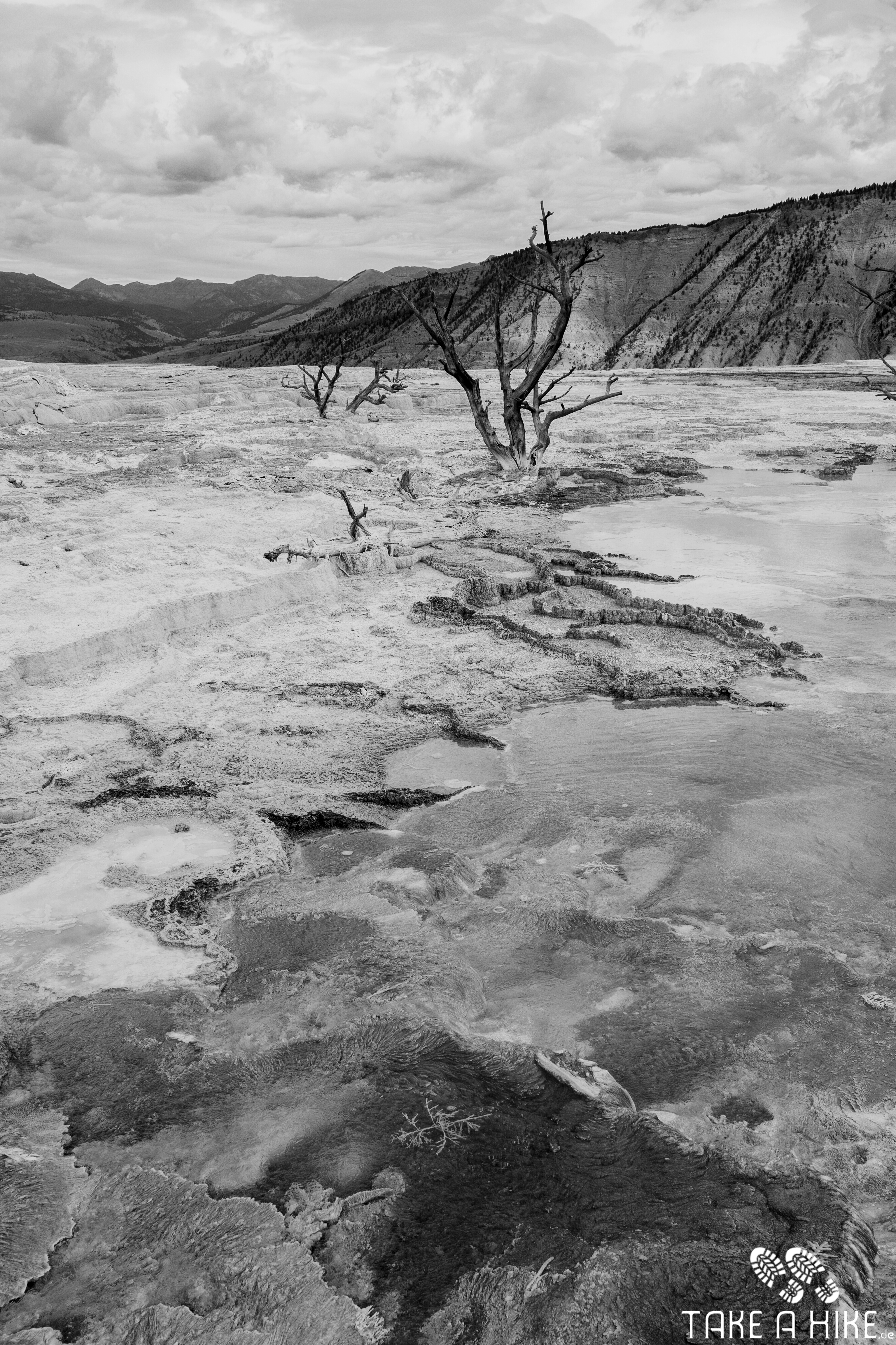 Black&White - Dead Tree Mammoth Hot Springs, Yellowstone NP