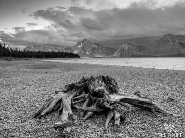 Black&White - Baumstamm am Jackson Lake, Grand Teton NP